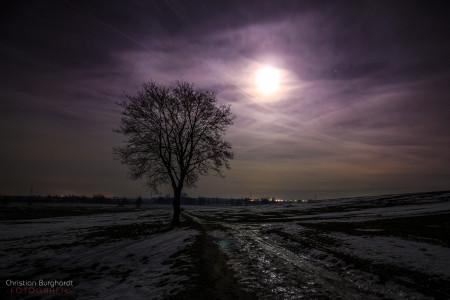 Der Mond und der Baum