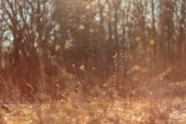Gras im Licht