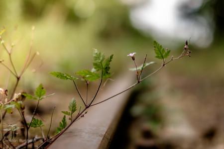 Blume am Gleis