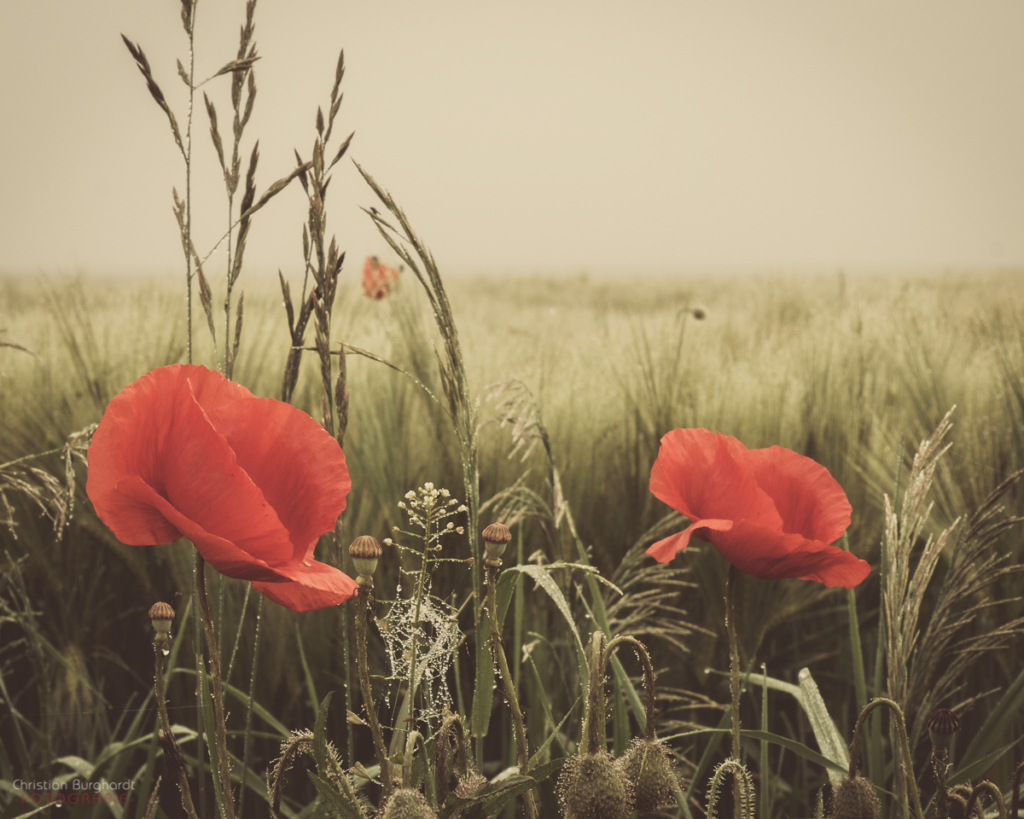 Blumen am Feld