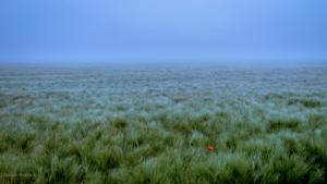Eine Blume im Feld