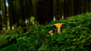 Pilz ... gleich bei Schlumpfhausen