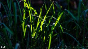 Licht im Gras