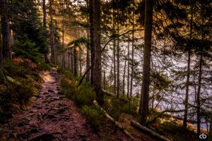 Licht im Wald | Schwarzwald | Landschaft | Fujifilm | X-T1 | 18-55mm