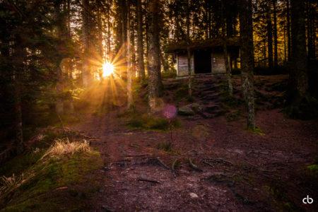 Licht im Wald mit einer Hütte im Wald | Schwarzwald | Landschaft | Fujifilm | X-T1 | 18-55mm