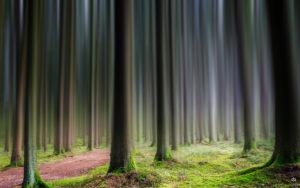 Wald | Landschaft | Photoshop