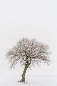 Baum im Schnee | Fujifilm | X-T1 | 12mm