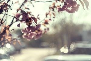 Flowers - Bokeh | Fujifilm | X-T1 | Helios 44-2