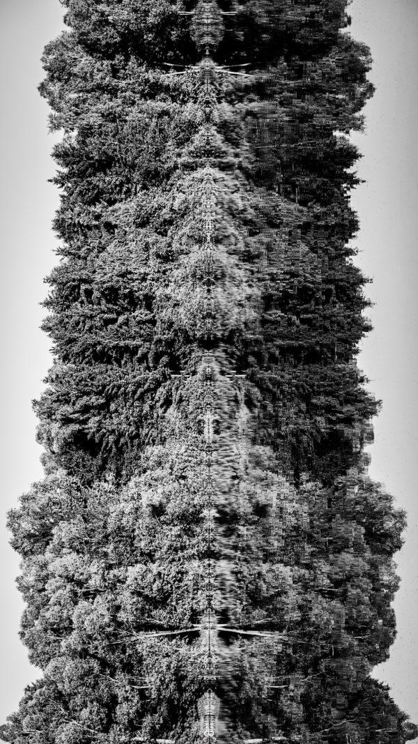 Bäume am See - Landscape | Fujifilm | X-T1 | 50-140mm